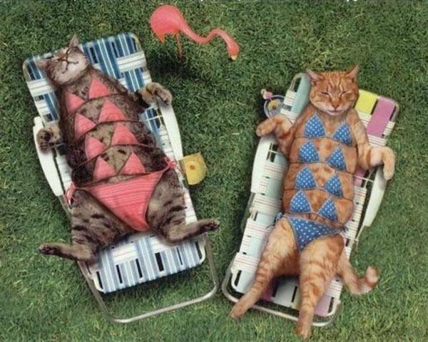 Cats in Bikinis