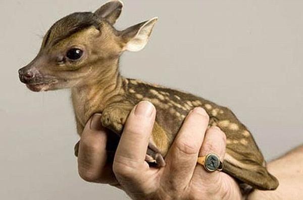 Bambi – Little Fawns