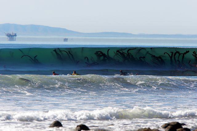Seaweed Monster in the Surf