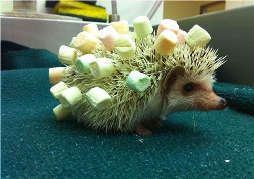 Marshmallow Hedgehog
