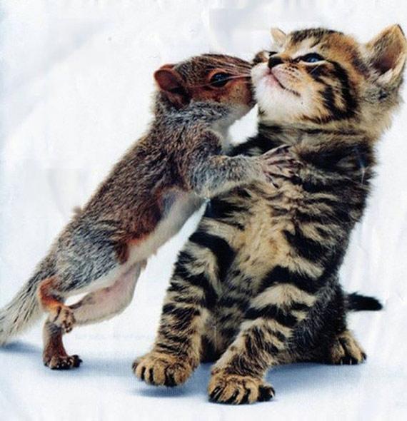 Squirrel Kissing a Kitten
