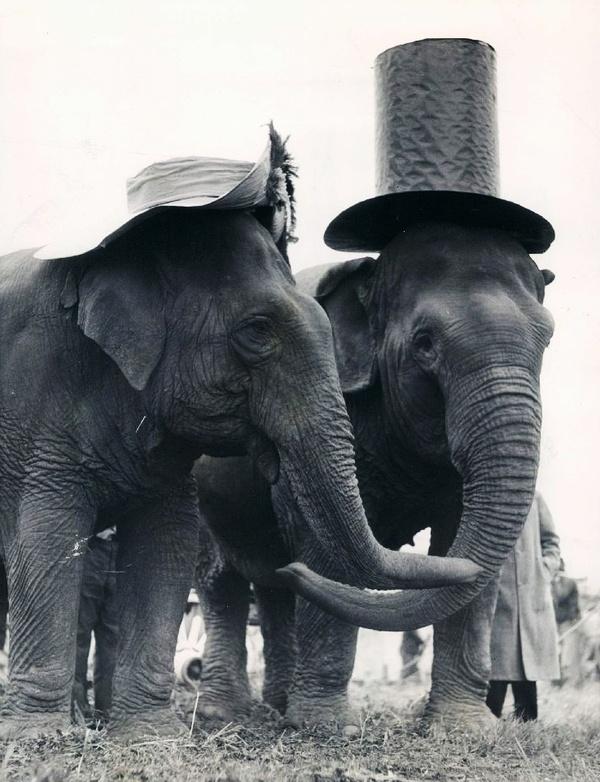 Elephants Ball