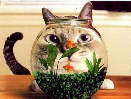 Funny Cats Likes the Fish