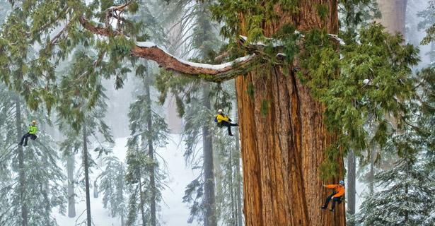 Climbing the President Tree