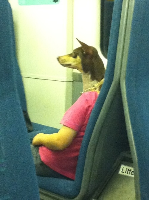 Dog commuting to work
