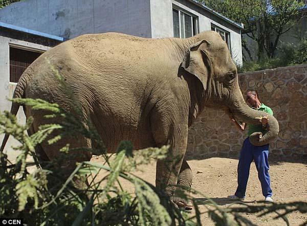 Baby-Elephant-2