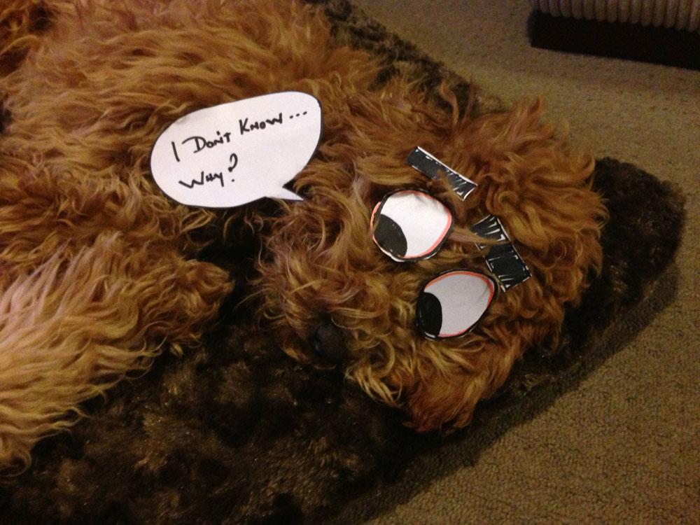Dogs Paper Cartoon Eyes