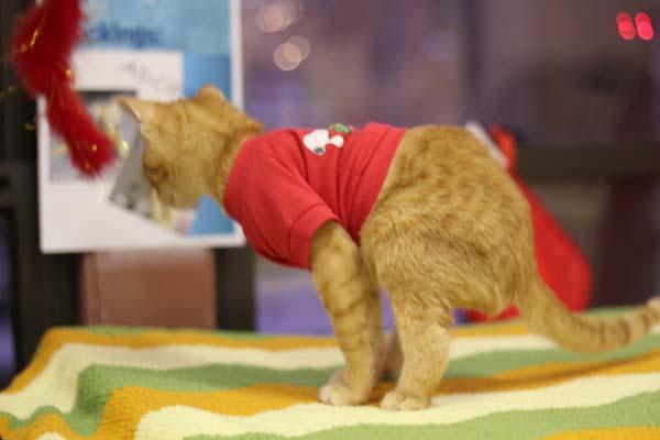 Kitty-Backwards-Legs-6
