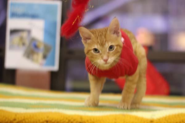 Kitty-Backwards-Legs-7