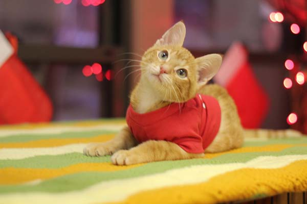 Kitty-Backwards-Legs-8