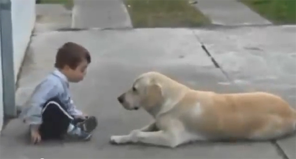 This Little Boy Has Down's Syndrome…But How His New Dog Responds Will Melt Your Heart.