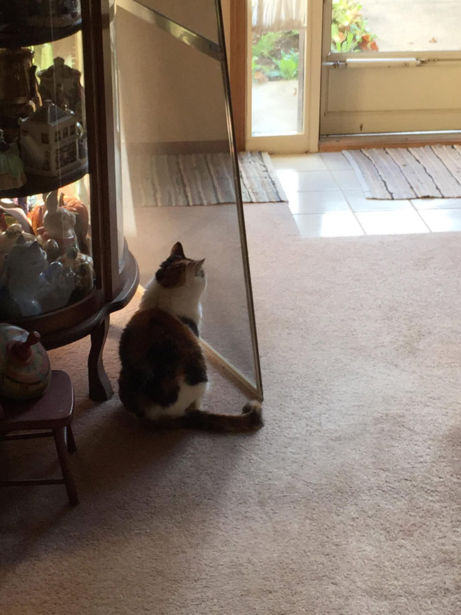 cat screen moved