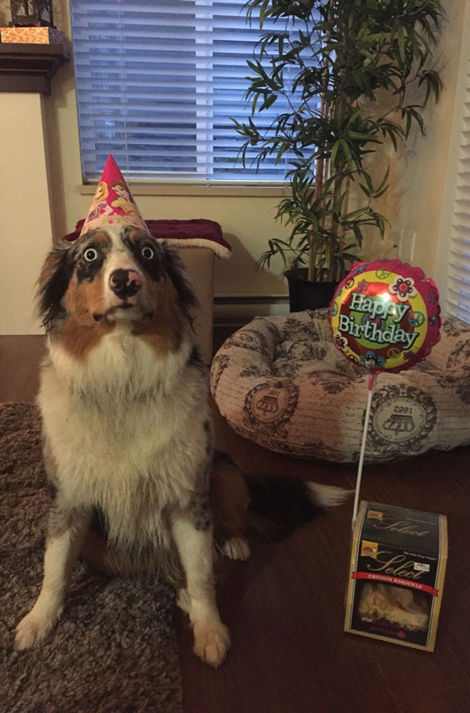 My Dog is Horrified That It's Her Birthday